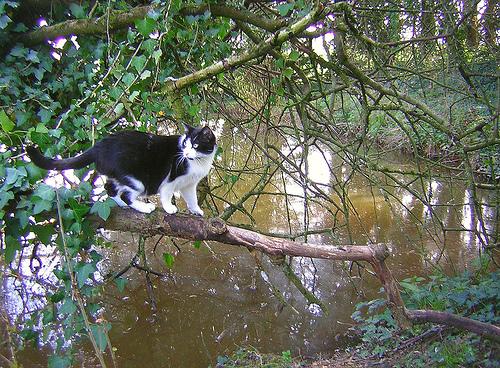 courageous-cat